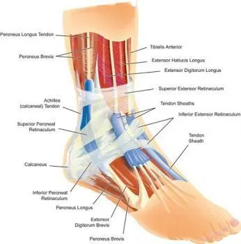Ankle Sprain Diagram