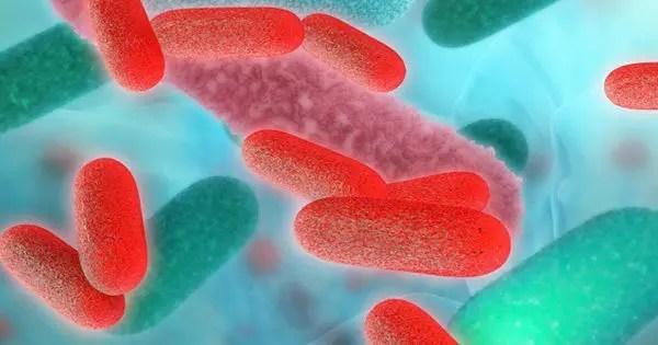 blog de imágenes de microbios con AR bajo el microscopio