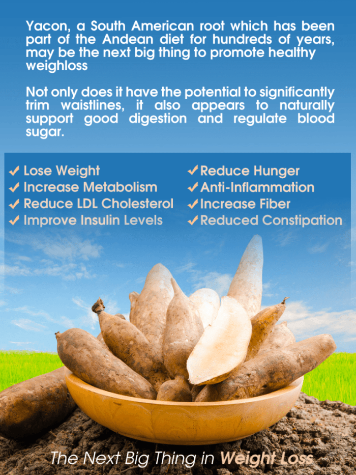 blog picture of yacon root with infographic