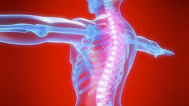 blog de ilustración de la columna vertebral a través de un ver a través del cuerpo