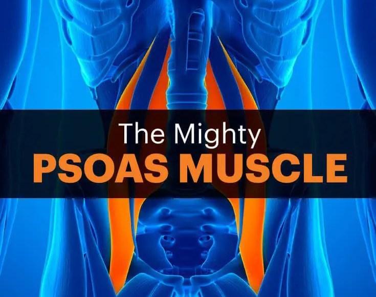 el blog gráfica del músculo psoas