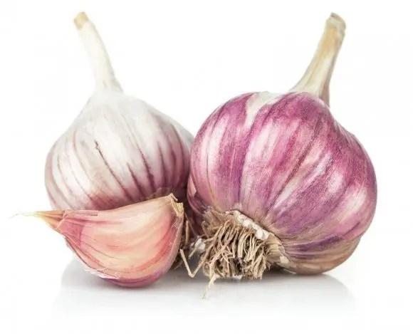 garlic  M