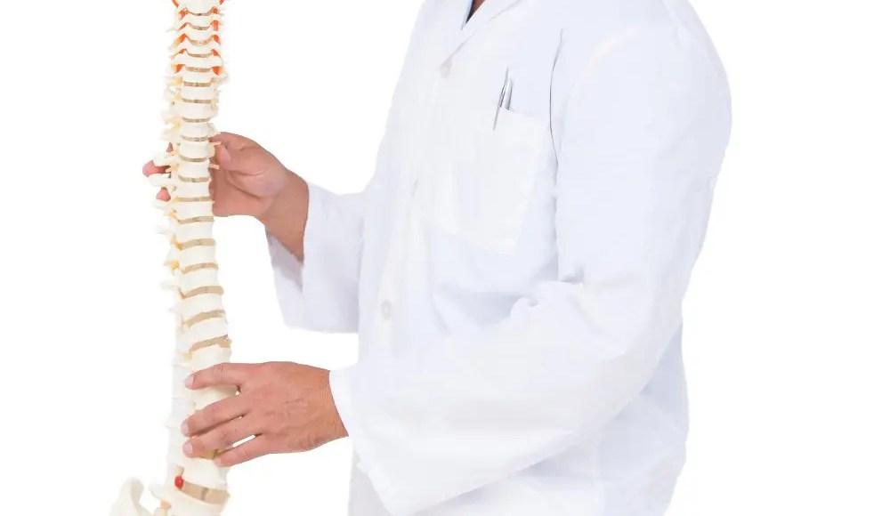 quiropráctico que muestra el modelo de la columna vertebral