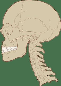 Normal Cervical Curve 2 - El Paso Chiropractor