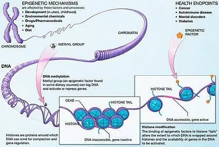 Epigenetic mechanisms