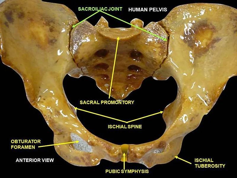 спайкроэлементная суставная дисфункция el paso tx.