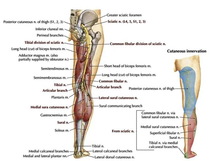 terapia da dor do nervo ciático el paso tx.