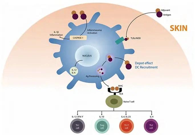 autoimmunity el paso tx.