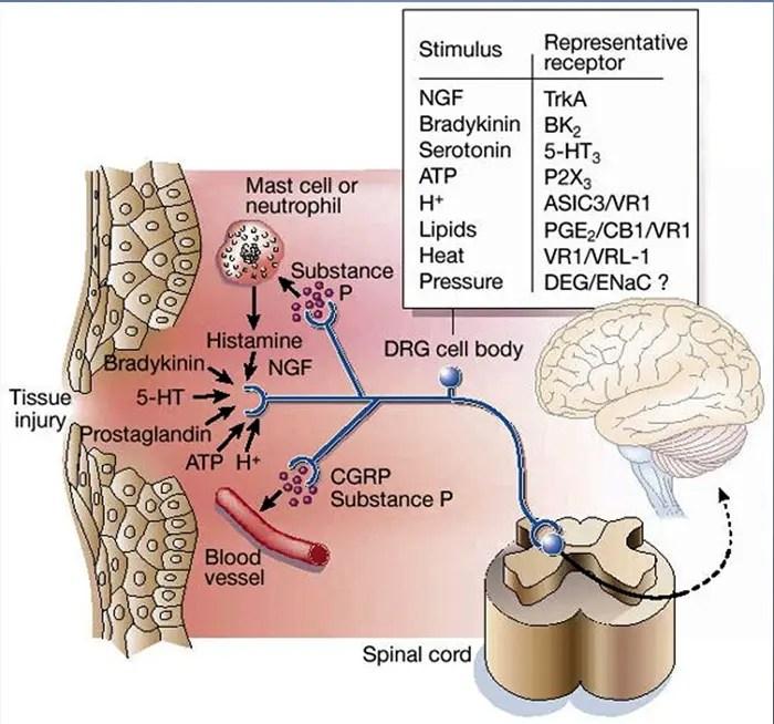biochemistry of pain el paso tx.