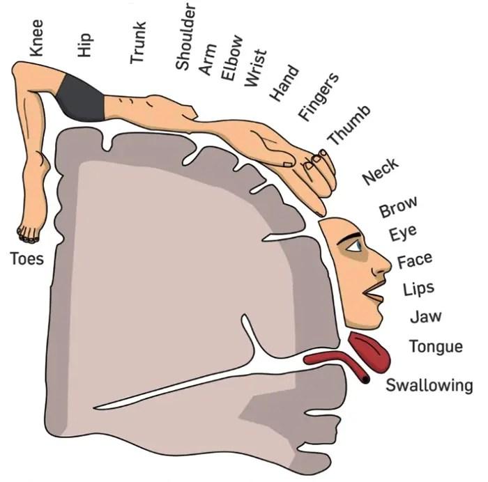 seizures epilepsy chiropractic el paso tx.