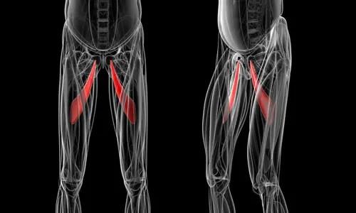 Спортивный пубалгический механизм травмы | El Paso, TX Chiropractor