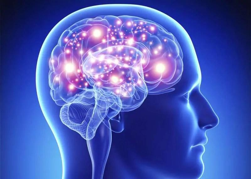Nrf2'in nörodejeneratif hastalıklar üzerindeki etkilerini göstermek için kullanılan bir beynin görüntüsü.