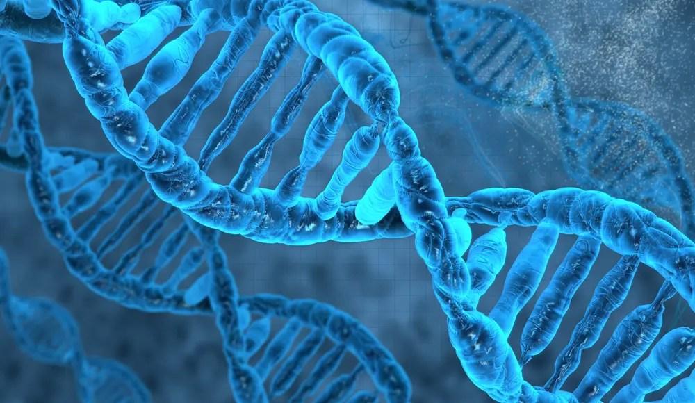 Imagen de primer plano de una hebra de ADN que demuestra la activación de Nrf2.