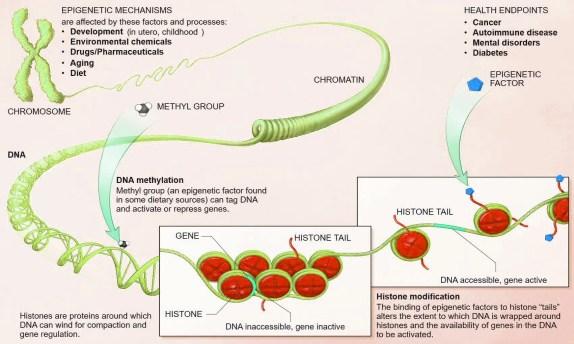 epigenetica nutrizionale el paso tx.