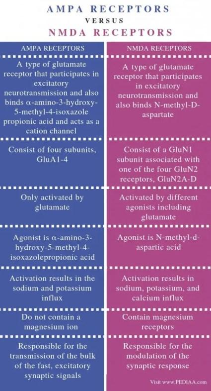 Diferença entre AMPA e Diagrama de Receptores de NMDA | El Paso, TX Chiropractor