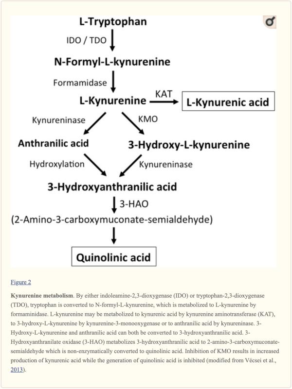 Figure 2 Kynurenine Metabolism | El Paso, TX Chiropractor