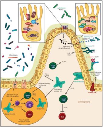 Influência microbiana