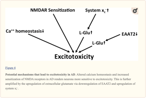 Figura 4 Potenziali meccanismi di eccitotossicità nell'AD | Chiropratico El Paso, TX
