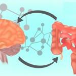 Functionele Neurologie Wat Is De Darm Hersenas El Paso Tx Arts Van Chiropractie