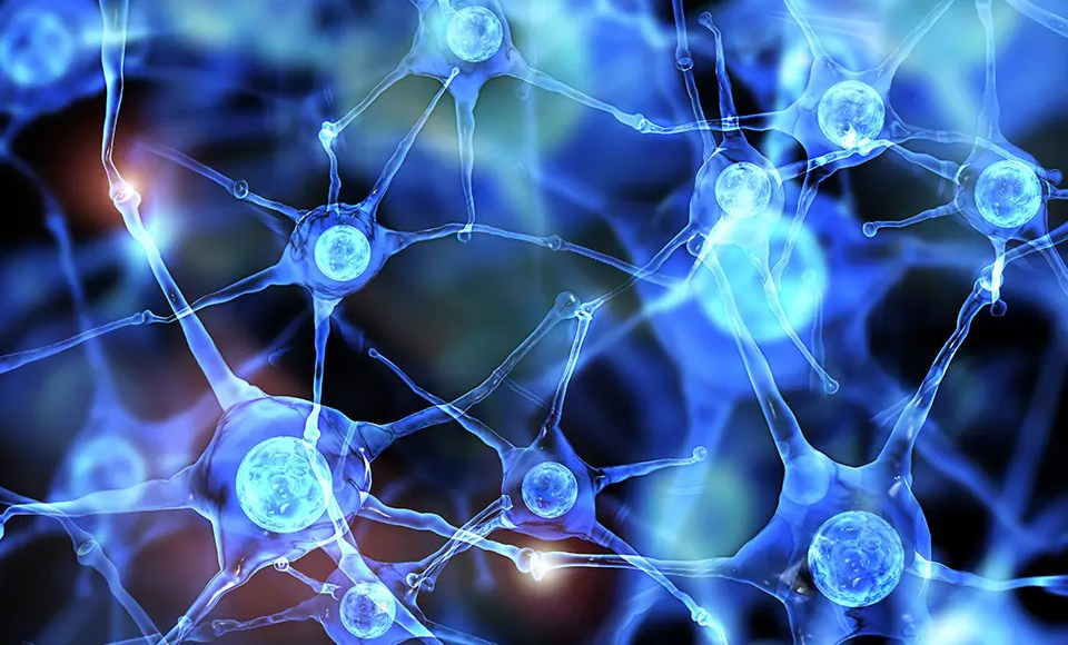 Functional Neurology: Differences Between Dopamine and Serotonin | El Paso, TX Chiropractor