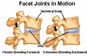 11860 Vista Del Sol, Ste. 128 Facet Joint Syndrome and Chiropractic Relief El Paso, Texas