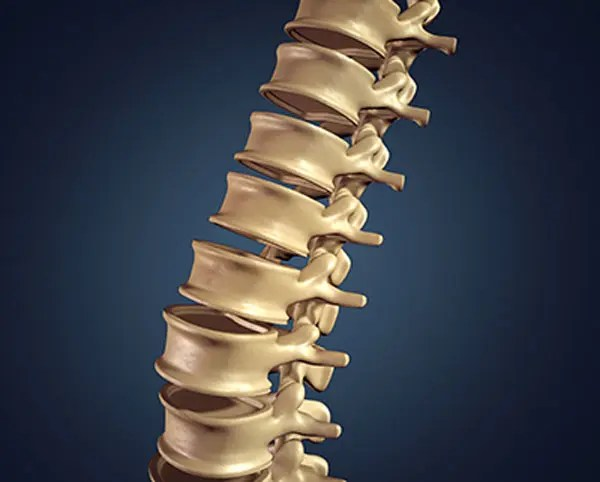 11860 Vista Del Sol, Ste. 128 Disc Pain and Nerve Root Pain Understanding Spinal Disc Problems
