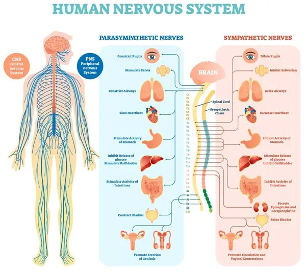 11860 Vista Del Sol, Ste. 128 Autoimmune Disease and Chiropractic Management