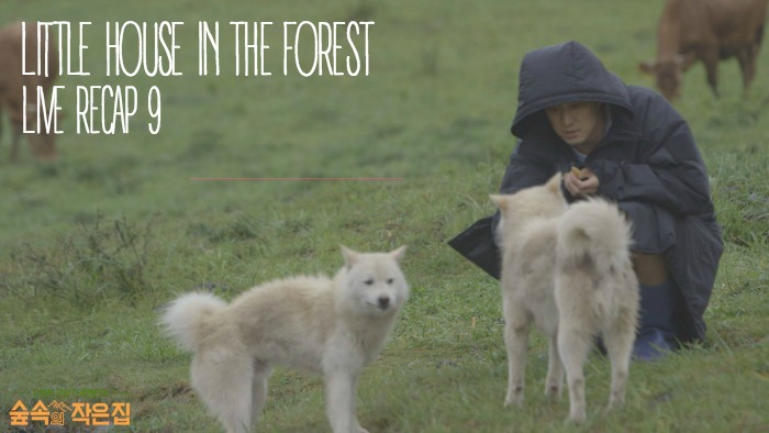 Live Recap for episode 9 of Little House in the Forest Starring So Ji-sub and Park Shin-hye