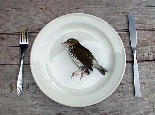 Oiseau mort et sorcellerie  Blog de Dramaticfr