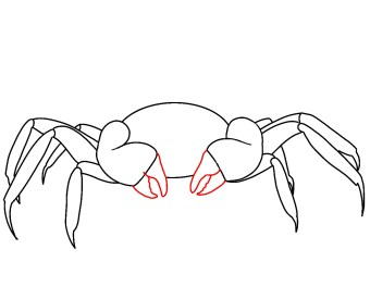 How To Draw A Crab Step 5
