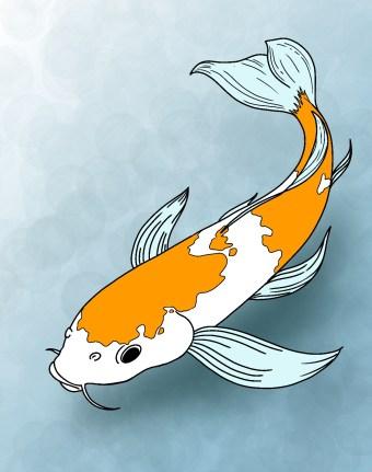 How To Draw Koi Fish Step 10