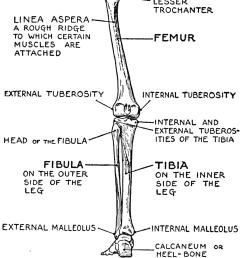 human leg bone diagram [ 1002 x 1320 Pixel ]