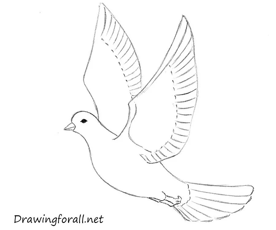 Peace Pigeon Drawing
