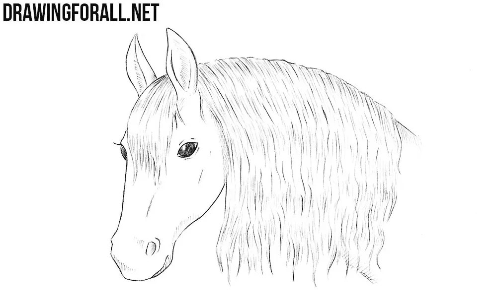 How to Draw a Horse Head | DrawingForAll.net