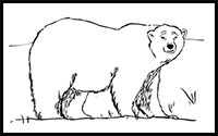 How to Draw Bears : Drawing Tutorials & Drawing & How to