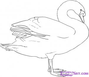 How to Draw Swans : Drawing Tutorials & Drawing & How to