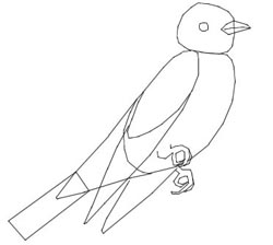 How to Draw Birds : Drawing Tutorials & Drawing & How to