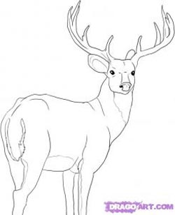 How To Draw A Deer — Better Life