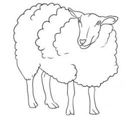 How to Draw Sheep & Lambs : Drawing Tutorials & Drawing