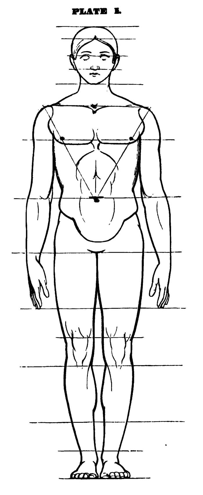 Drawing the Human Head , Face, and Body in the Correct