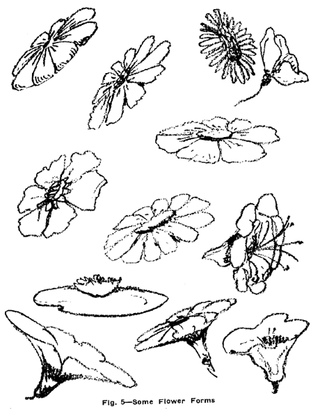 Drawing Flowers, Plants, Weeds, and Leaves with Drawing