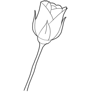 How to Draw Long Stem Roses Drawing Tutorial for