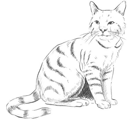 Guide to Drawing Cats & Kittens with Step by Step