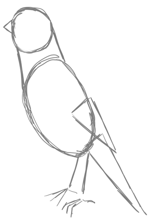 How to Draw a Canary with Step by Step Tutorial to Drawing
