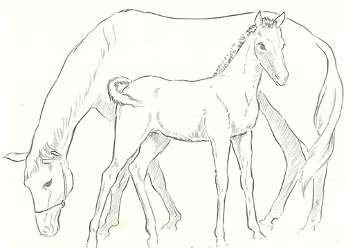 How to Draw Momma and Baby Horse (Mare and Foal) Drawing