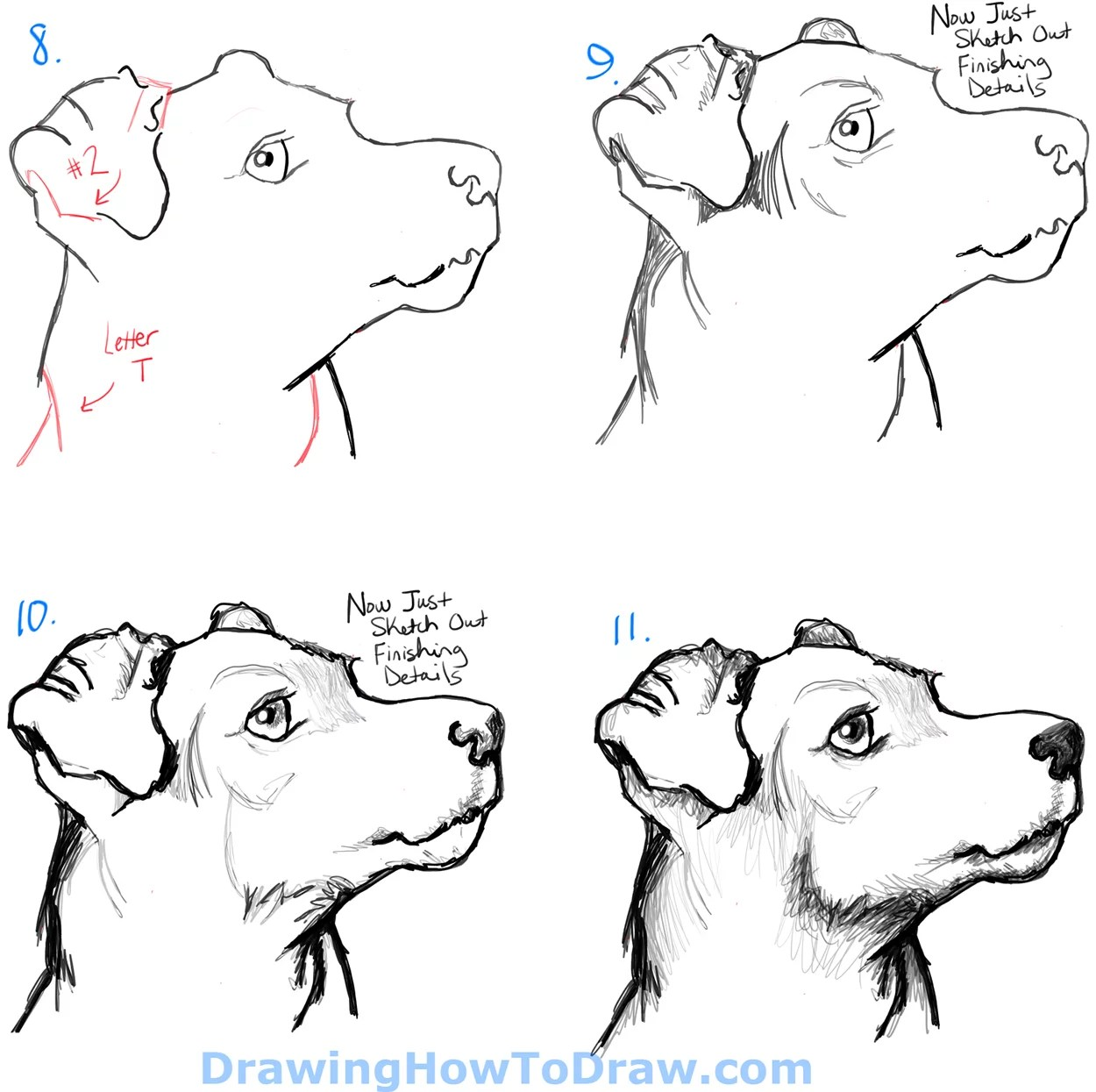How To Draw A Terrier S Face Dog S Face With Easy Steps