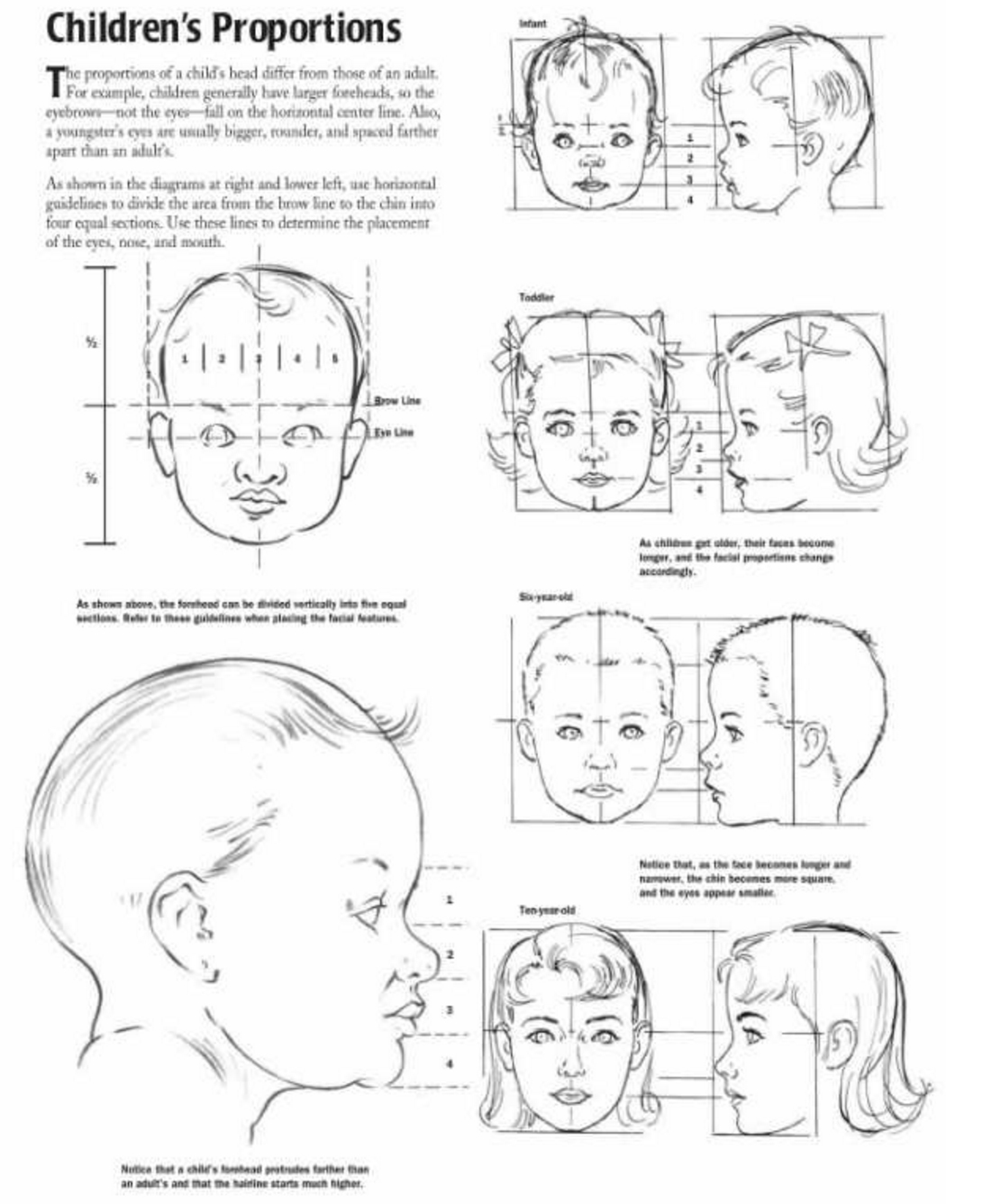 Proportions of Children, Infant, and Baby Heads Reference