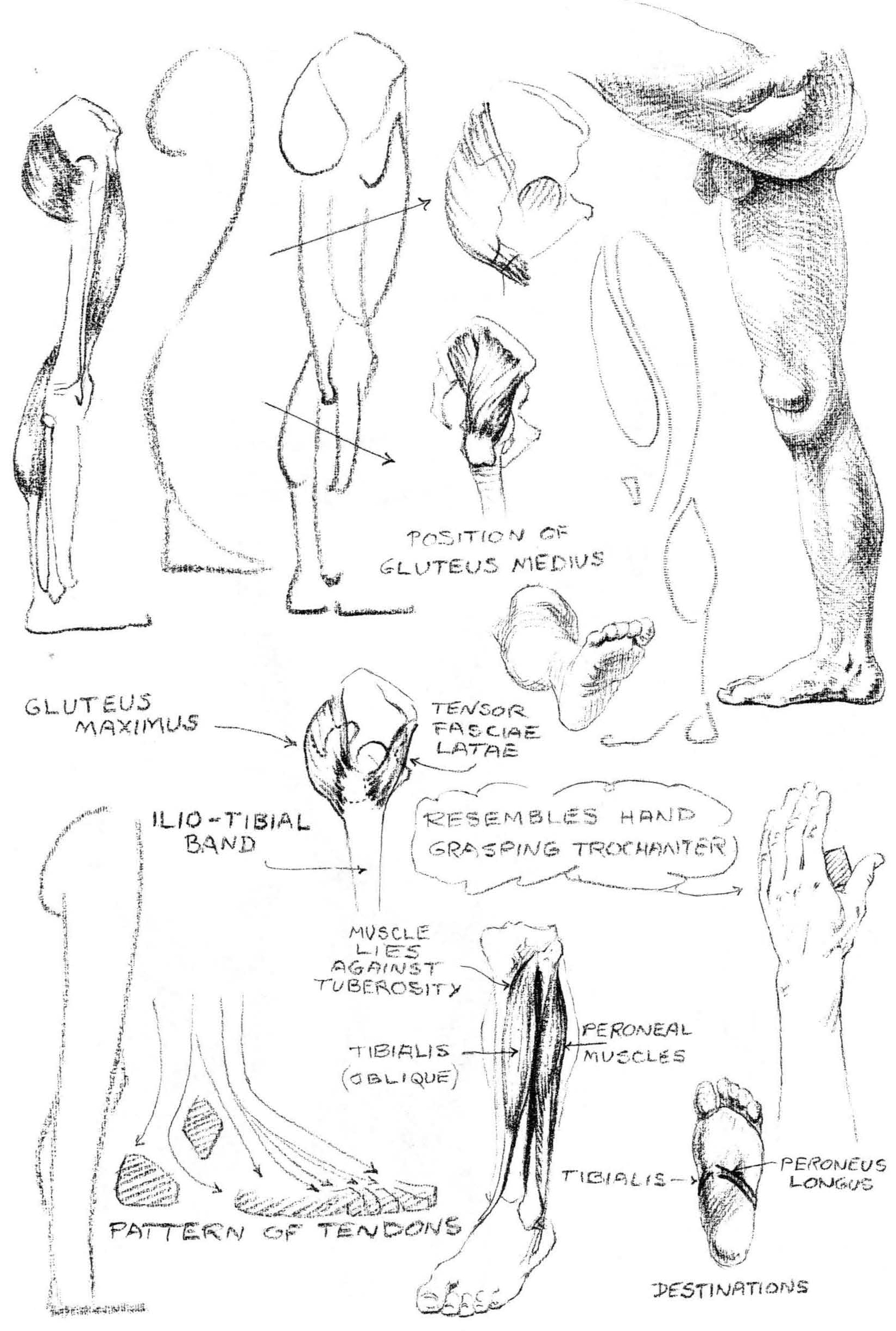 How to Draw the Foot : Drawing Feet and the Anatomy of