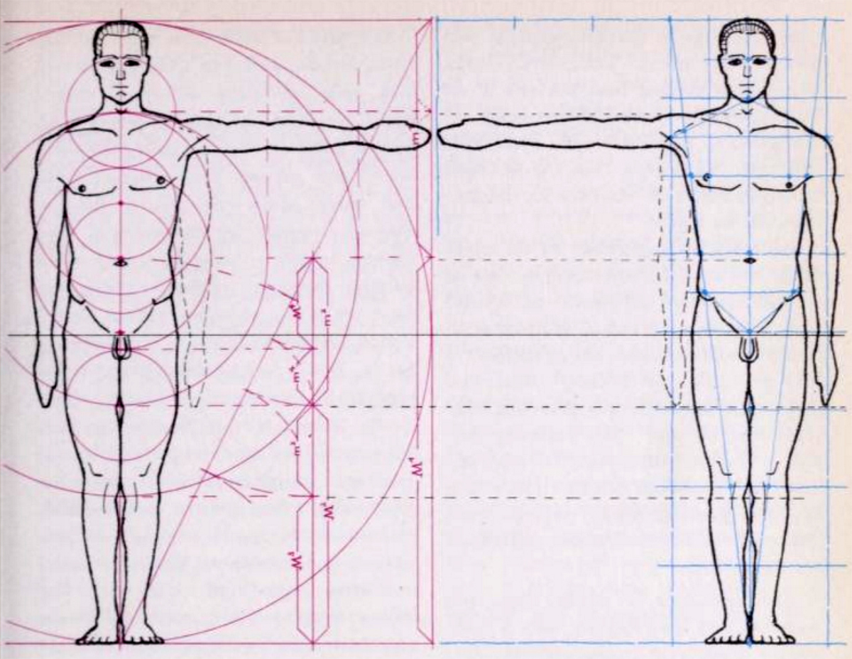 Drawing A Human Figure In Correct Measurements And