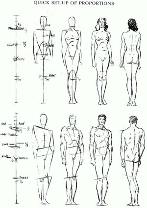 Proportions of the Human Figure : How to Draw the Human